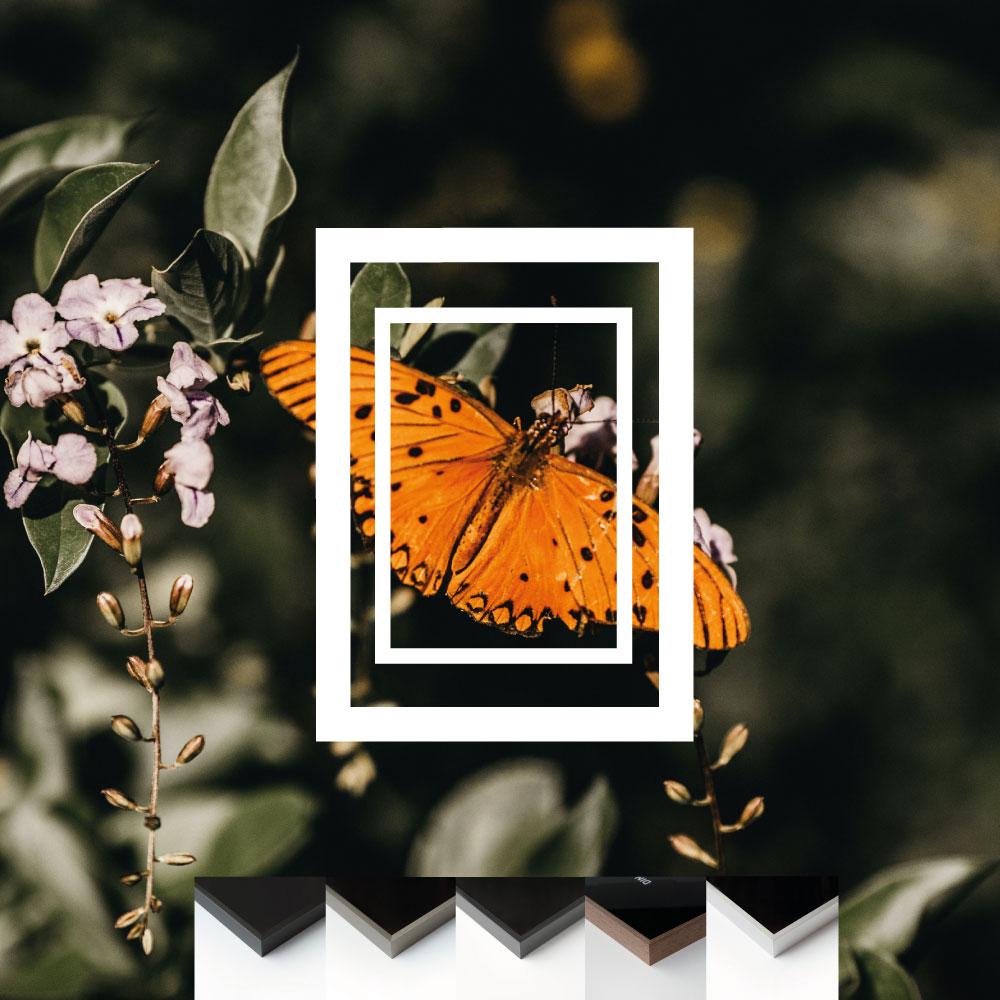 cadre-pour-les-petits-formats-à-encadrer--exemple-encadrement-photo-papillon